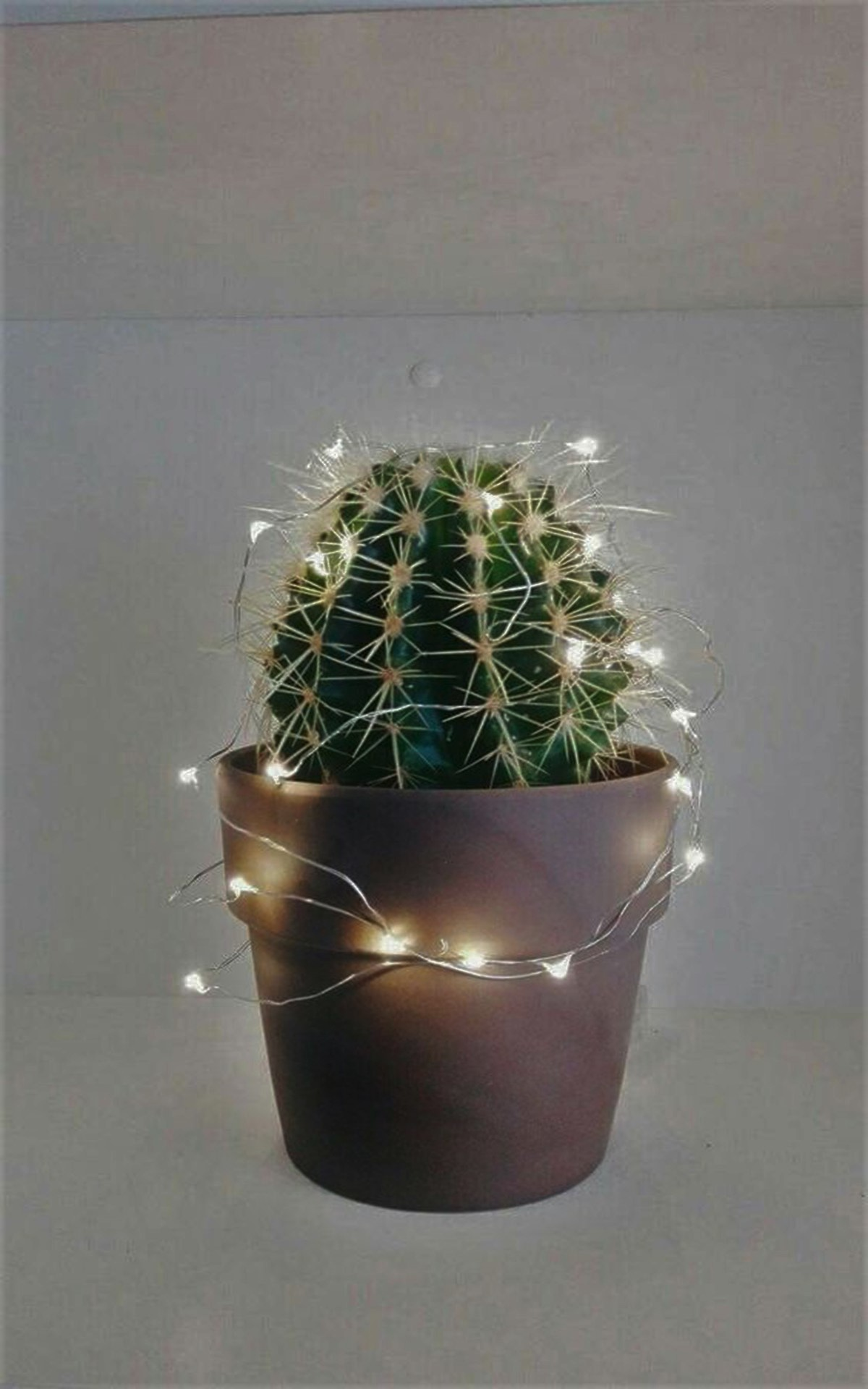 SUCCULENT WITH LIGHTS